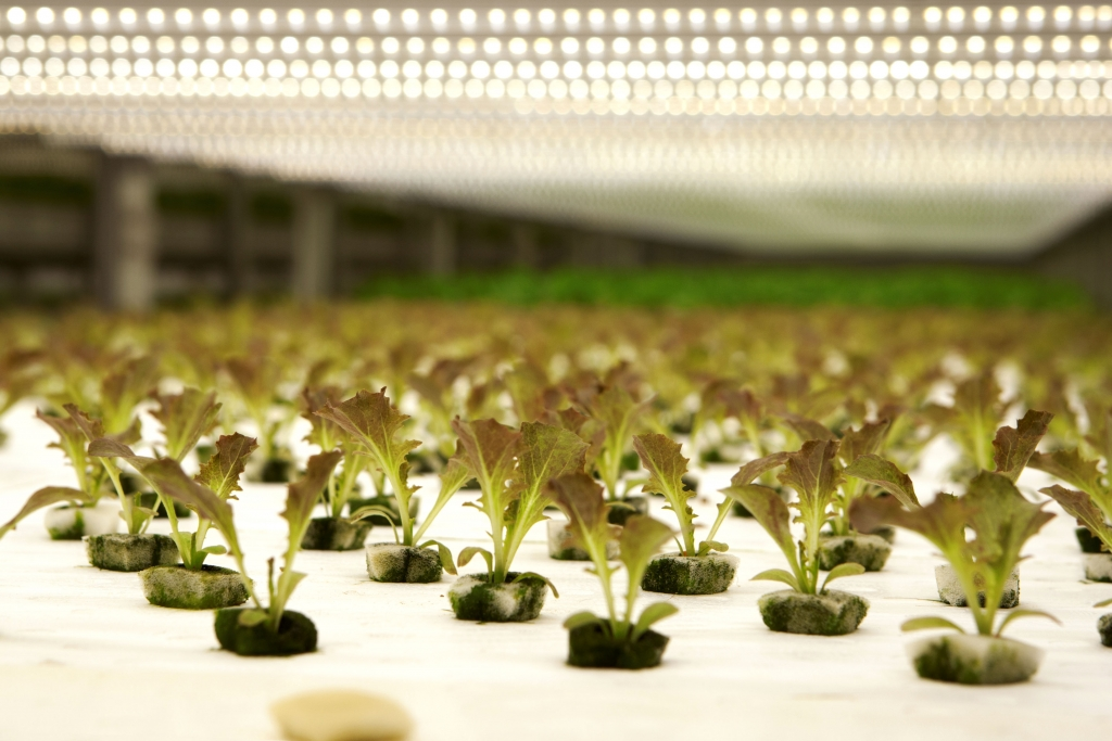 freshfarmplant-factory-