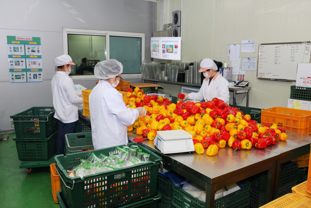 pretreatment-vegetables-processing
